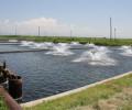 Ձկնաբուծությունը պատուհաս է դարձել Արարատյան դաշտի ստորերկրյա ջրերի և բնակչության համար