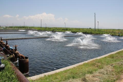 Ձկնաբույծները պնդում են, որ իրենք ոչ մի առնչություն չունեն Արարատյան արտեզյան ավազանի ստորեկրյա ջրերի պաշարների գերշահագործման հետ