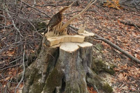 Ոչնչացվող անտառի հետքերով – Տավուշ | Տեսանյութ
