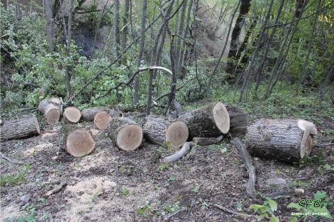 Ոչնչացվող անտառի հետքերով 2 – Սյունիք. տեսանյութ, լուսանկարներ