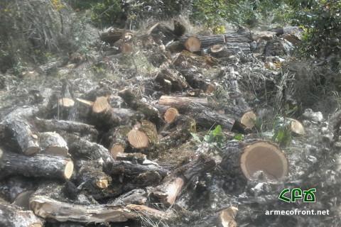 Ոչնչացվող անտառի հետքերով 3 – Շիկահող․ լուսանկարներ