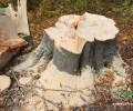 Ոչնչացվող անտառի հետքերով 4 – Լոռի (տեսանյութ, լուսանկարներ)
