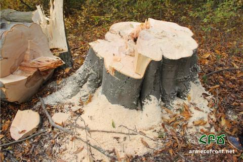 Լոռիի անտառների սպանդը (տեսանյութեր)
