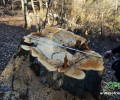 Ոչնչացվում են նաև Ստեփանավանի անտառները (տեսանյութեր)