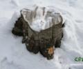 «Ձեզ էլ իմ անտառում չտենամ»․ Հայանտառի աշխատակից