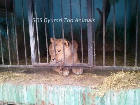 Նկատառումներ Հայաստանում անազատ և կիսազատ պայմաններում պահվող վայրի կենդանիների և այդ ոլորտը կարգավորող իրավական դաշտի վերաբերյալ