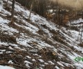 Ինչ է կատարվում Շնողի անտառներում (տեսանյութ)