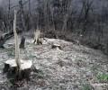 Անտառների սպանդ Կապանի անտառտնտեսության Ճակատենի անտառպետության տարածքում