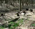 Ահազանգ Իջևանի անտառներից՝ ծառերի սպանդը շարունակվում է