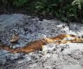 Տանձուտի հանքի թթվային ապարների դարավոր դրենաժը․ լուսանկարներ